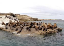 Seals, Patagonia - Puerto Pir&#225;mides by Ralf Levc 